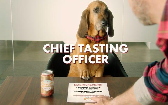 Busch quiere darle un trabajo remunerado a tu perro holgazán y holgazán