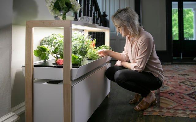 Bu Mutfak Bahçe Sistemi, Kilitleme Diyetinize Mikro Yeşiller (ve Alexa) Ekler