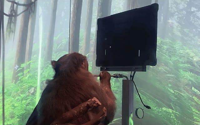 ニューラリンク:私たちは猿にその心だけを使ってポンを演奏させました