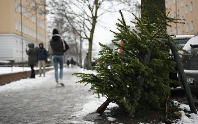 Siempre podrías comer tu árbol de Navidad