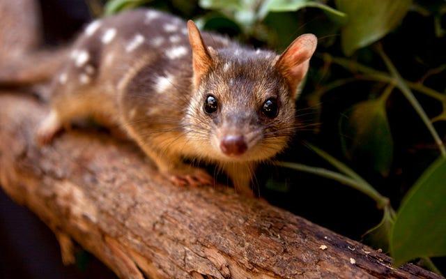 自然淘汰のない13世代後、この動物は捕食者を恐れることを忘れました