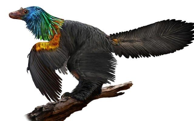 यह बर्ड-लाइक डायनासोर विशेष रूप से एक आश्चर्यजनक इंद्रधनुष-रंगीन माने