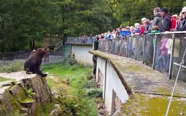 Oto niedźwiedź, który ma swoje pierdolone priorytety