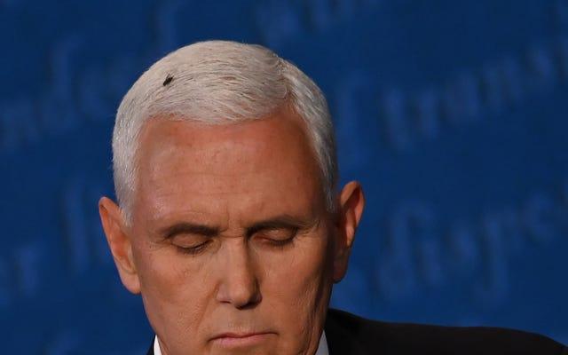 Lizzoの「flyonMike Pence's head」コスチュームは、今年必要になる唯一のコスチュームです。ありがとう