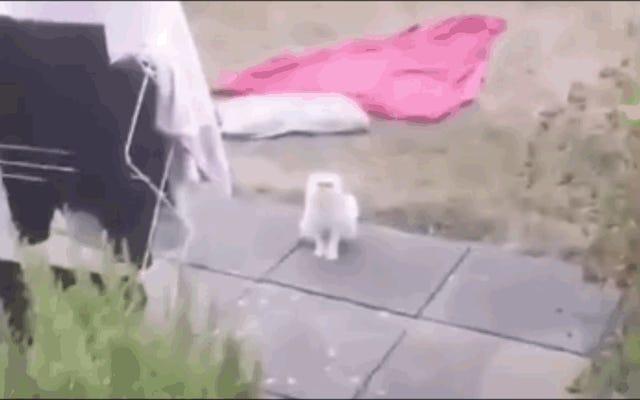 ไวรัลแมวที่มีการแสดงออกที่เหนือจริงไม่เพียง แต่เป็นของจริงเท่านั้น แต่ยังเป็นคนดังในอินสตาแกรมอีกด้วย