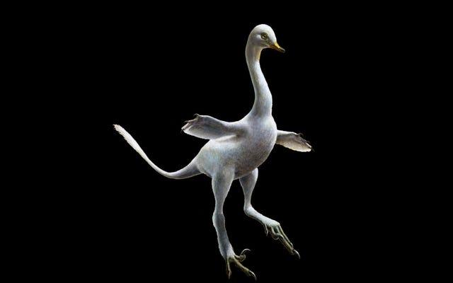 ไดโนเสาร์ตัวใหม่ประหลาดเป็นส่วนหนึ่งของเป็ดส่วน Raptor