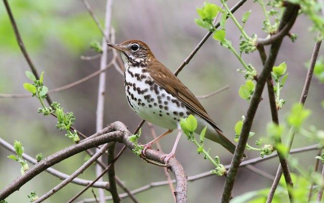 L'Amérique du Nord a perdu près de 30% de ses oiseaux depuis 1970, bouleversant les découvertes d'une nouvelle étude