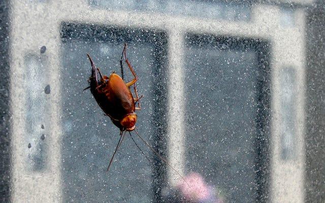 ゴキブリの蜂起が私たちに迫っています