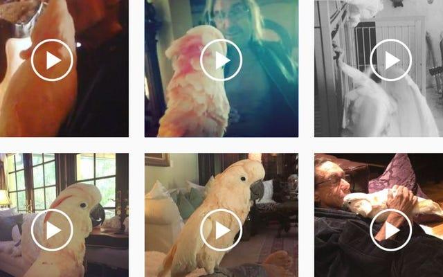 Какаду Игги Попа, Бигги Поп, завел симпатичный аккаунт в Instagram