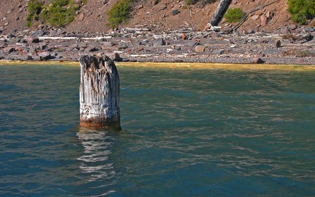 Questo tronco d'albero sta fluttuando verticalmente da 120 anni e nessuno sa come diavolo ci sia riuscito