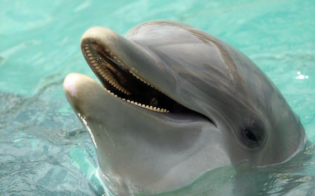 Proszę, módlcie się za ukraińskie delfiny wojskowe, które są teraz martwe
