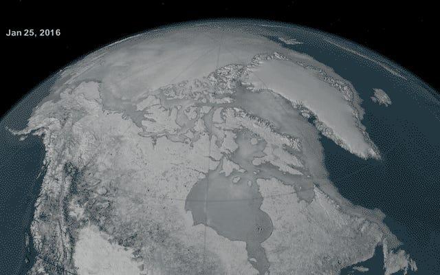 आर्कटिक सागर की बर्फ एक और आतंकित माइलस्टोन का शिकार करती है