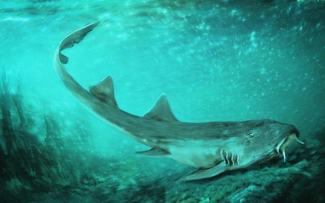 これは、ビデオゲームにちなんで名付けられた先史時代のサメ、ガラガドンです。