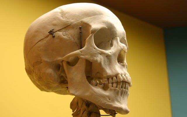 Vos os sécrètent une hormone qui peut vous faire paniquer, constatent les scientifiques