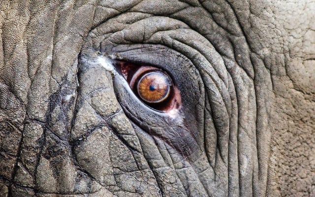 象は非常に小さな動物を恐れており、それはマウスではありません