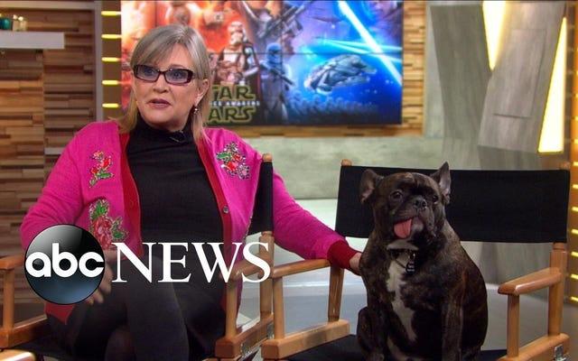 Carrie Fisher i jej pies, Gary, gwiazdy w najlepszym wywiadzie wszechczasów