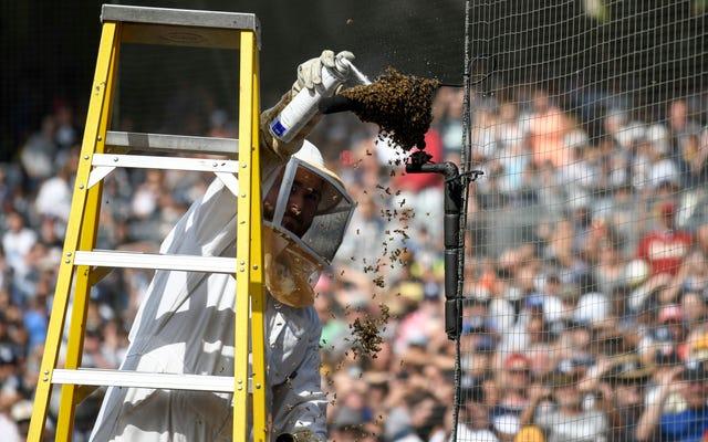 Padres ने मधुमक्खियों के लिए बहुत सारे कारण बताए