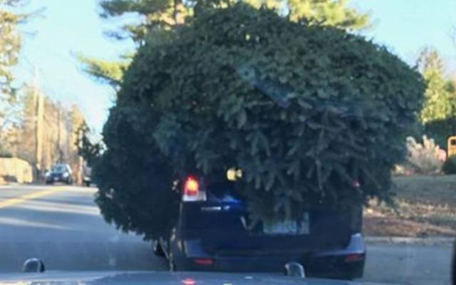 これがあなたの巨大なクリスマスツリーを運ぶ一つの方法です