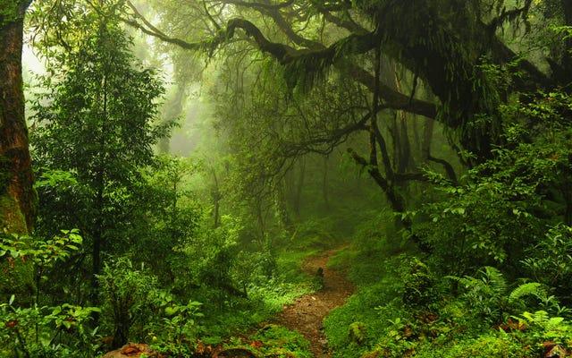 Tree.fm के साथ दुनिया भर के वनों को सुनो