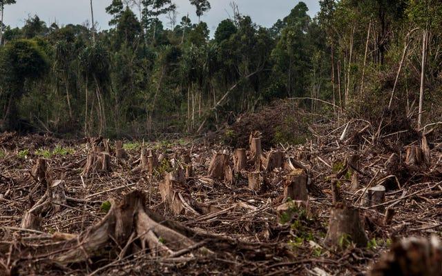 वनों की कटाई और पाम ऑयल प्लांटेशन एक ईंधन बूम, अध्ययन के संकेत देते हैं