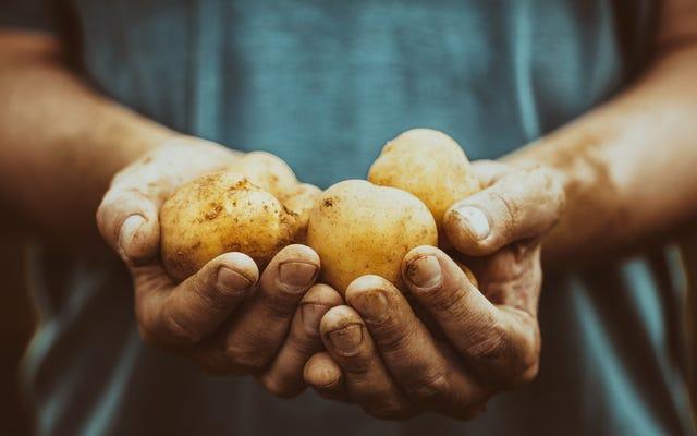 農家がお気に入りの感謝祭の料理の材料を生産する方法を学ぶ