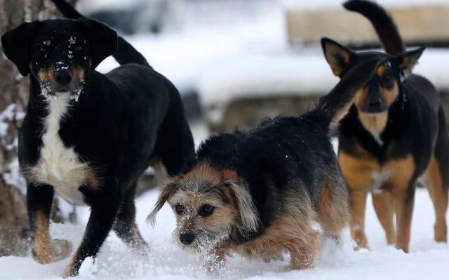 Aviso: hay un retiro de comida para perros por preocupaciones sobre la salmonela y la listeria
