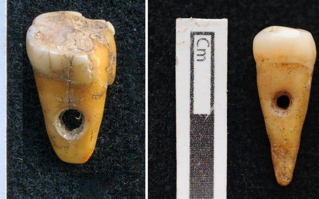 先史時代のトルコ人は宝石として人間の歯を身に着けていました、まれな発見は明らかにします