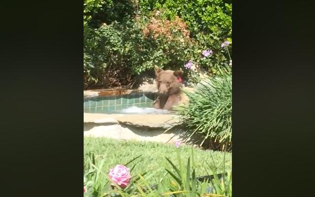 Es hora de cerrar la sesión y patearlo como este oso chill-ass, que bebe margarita