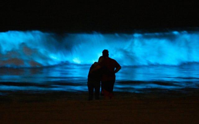 生物発光波がカリフォルニアのビーチに群衆を引き寄せる