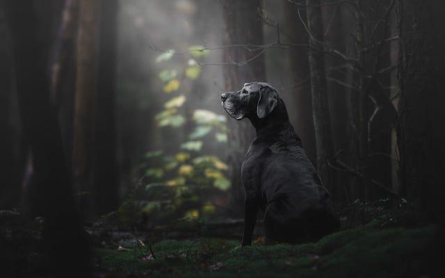 今年の犬の最高の写真を選ぶコンテストによると、今年の犬の最高の写真