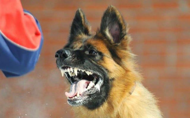Un naturopathe traite le mauvais comportement d'un enfant de quatre ans avec une dose de salive de chien fou
