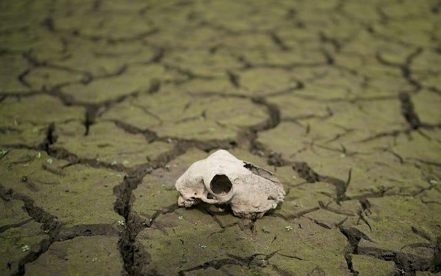 Mọi người chỉ hy vọng Trái đất vẫn ở đây khi Merrily We Roll Cùng của Richard Linklater kết thúc sau 20 năm