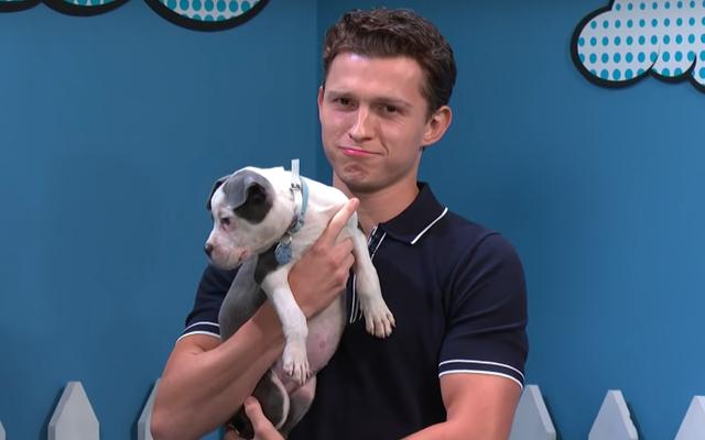 トム・ホランドが私のアパートの「犬を飼わない」という方針を尊重することを本当に難しくしている