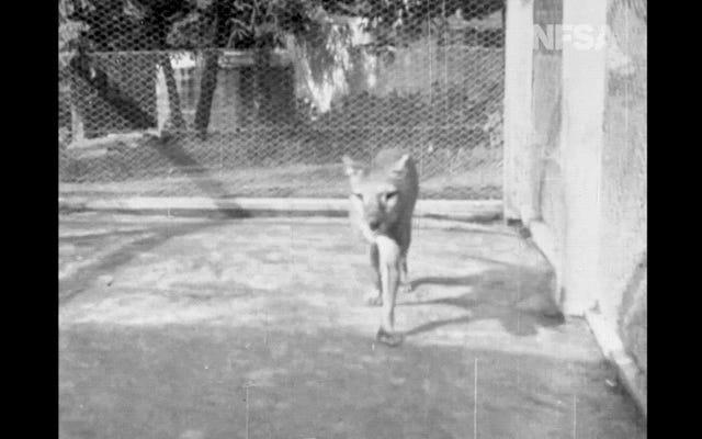 復元された映画で見つかったタスマニアタイガーの最後の既知の映像