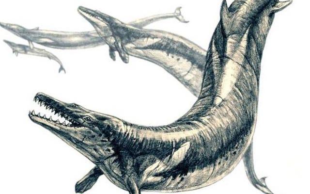 彼らは3500万年前に住んでいた別の巨大なクジラの中にクジラの残骸を発見します