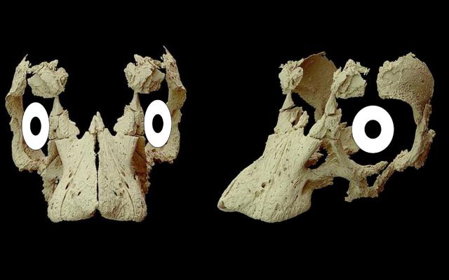 Trứng khủng long chưa bóc vỏ tiết lộ khuôn mặt đáng ngạc nhiên của một em bé Sauropod