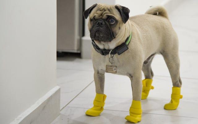 心配しないでください:犬の散歩はおそらくあなたにCovid-19を与えるつもりはありません