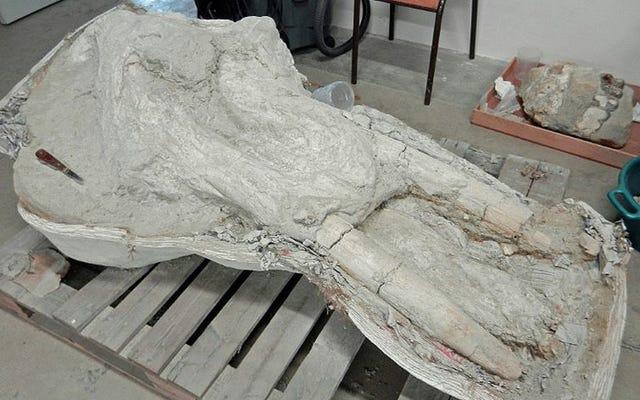 Dia menyembunyikan fosil yang sangat langka selama bertahun-tahun karena dia tidak ingin tanahnya rusak