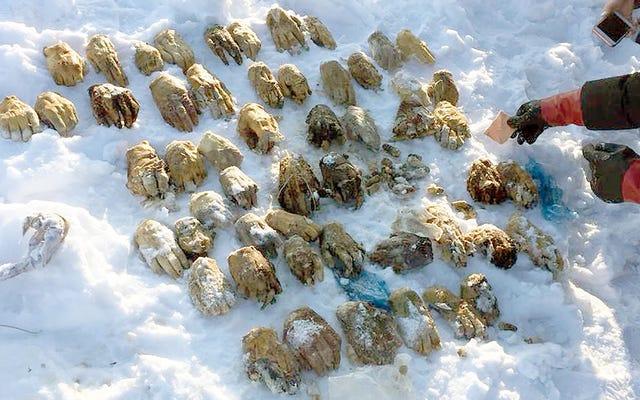 Россия расследует внешний вид 54 человеческих рук, найденных на небольшом острове в Сибири