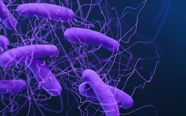 Báo cáo mới của CDC về Superbugs chứa đầy tin xấu