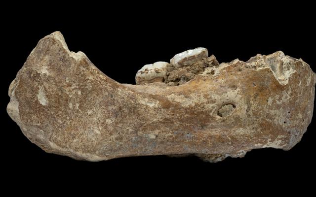ジョーボーンの化石は、現代の人間と交配した謎の種であるデニソワ人についてもっと明らかにします