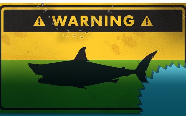 サメによる襲撃を生き残る方法