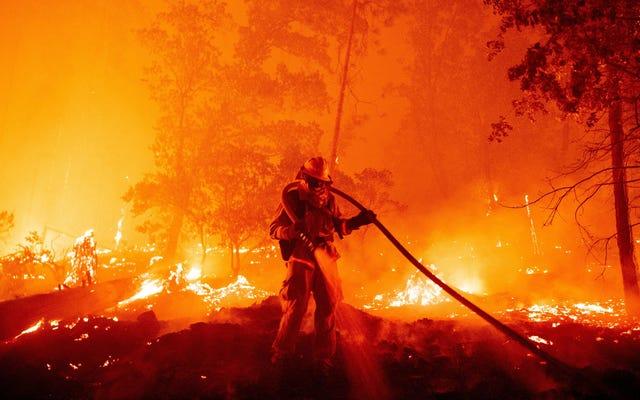 Sebuah Pesta Pengungkapan Gender Memicu Salah Satu dari Banyak Kebakaran Hutan yang Berkobar di California