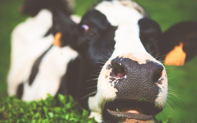 どちらが環境に良いですか:肉のない月曜日または#NoRedOctober?