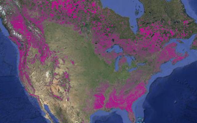 2013年に世界は1800万ヘクタールの森林を失った