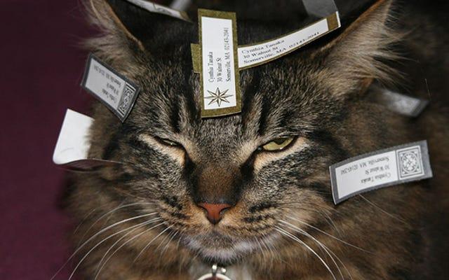 Obtenga etiquetas de dirección gratuitas completando este formulario de Sociedad Protectora de Animales