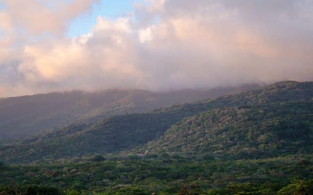 熱帯保護区は大量の炭素を大気中に遮断しています