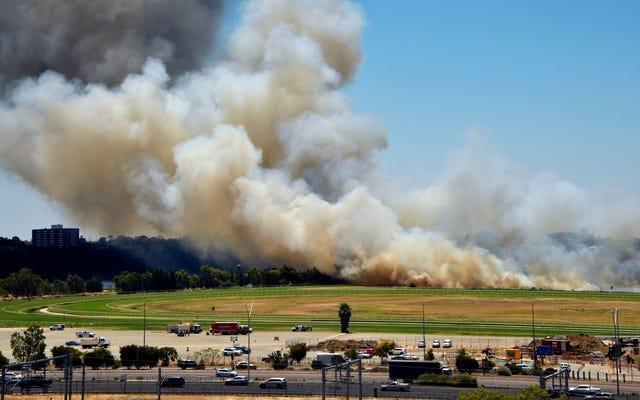 Świetnie, teraz pożary buszu w Australii napędzają zmiany klimatyczne