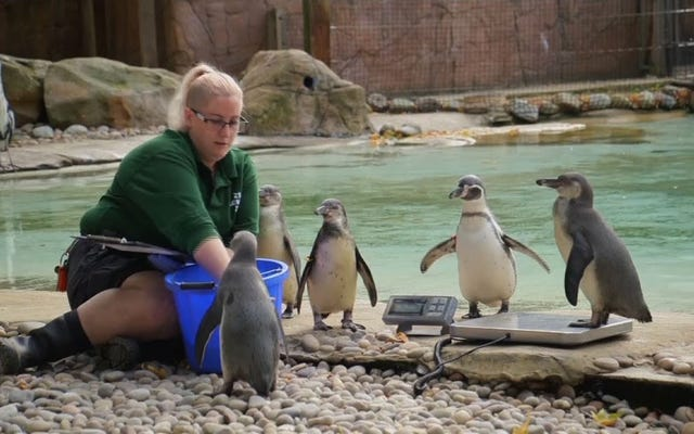 そして今、ロンドン動物園の毎年恒例の計量からのいくつかの愛らしいシーン