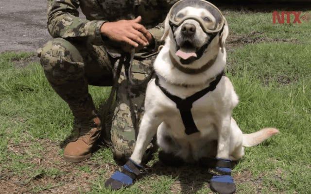 Frida İyi Bir Köpek Ama Meksika'daki Depremden 52 Kişiyi Kurtarmadı